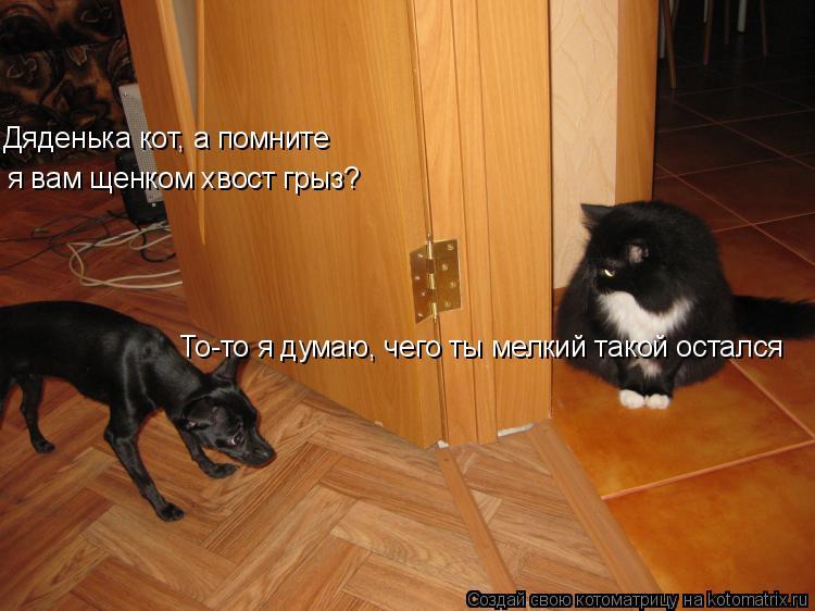 Котоматрица: Дяденька кот, а помните  я вам щенком хвост грыз? То-то я думаю, чего ты мелкий такой остался