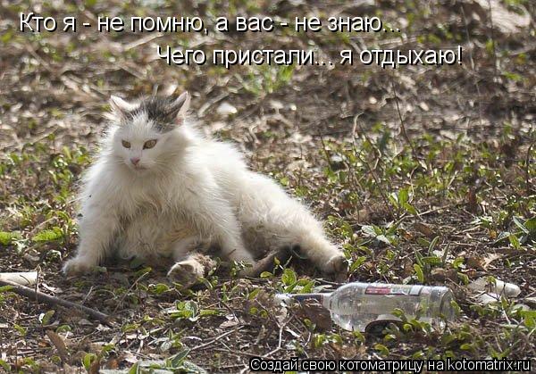 Котоматрица: Кто я - не помню, а вас - не знаю...  Чего пристали... я отдыхаю!