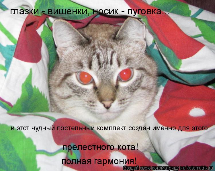 Котоматрица: глазки - вишенки, носик - пуговка... ... и этот чудный постельный комплект создан именно для этого прелестного кота! полная гармония!