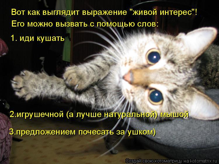 """Котоматрица: Вот как выглядит выражение """"живой интерес""""! Его можно вызвать с помощью слов: 1. иди кушать 2.игрушечной (а лучше натуральной) мышой 3.предложе"""