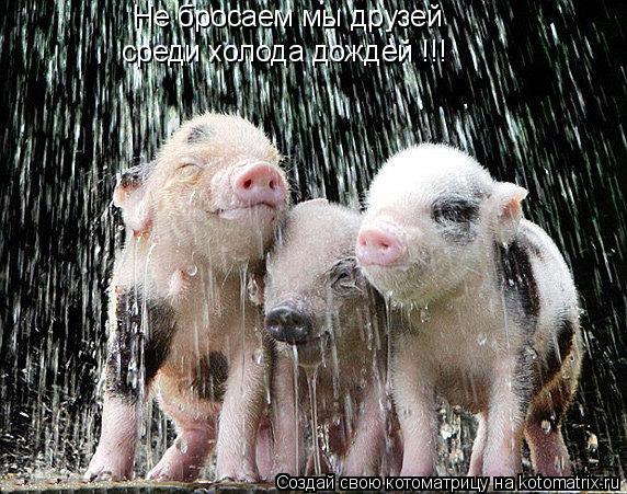 Котоматрица: Не бросаем мы друзей среди холода дождей !!!