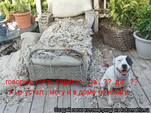 Котоматрица: ..говориш кость спрятал...да...??..да...?? ..я не устал...могу и в доме поискать...