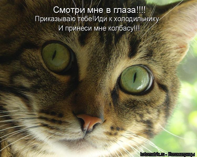 Котоматрица: Смотри мне в глаза!!!! Приказываю тебе!Иди к холодильнику И принеси мне колбасу!!!