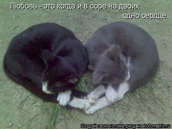 Котоматрица: Любовь - это когда и в соре на двоих  ...одно сердце.