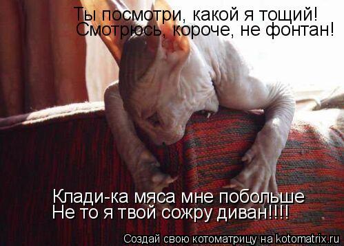 Котоматрица: Ты посмотри, какой я тощий! Смотрюсь, короче, не фонтан! Клади-ка мяса мне побольше Не то я твой сожру диван!!!!