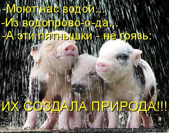 Котоматрица: -Моют нас водой... -Из водопрово-о-да... -А эти пятнышки - не грязь: ИХ СОЗДАЛА ПРИРОДА!!!
