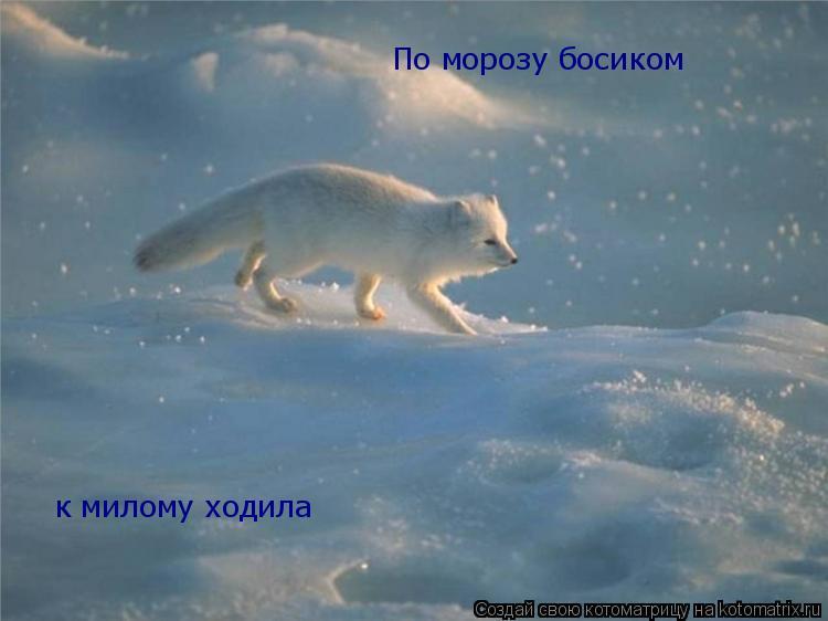 Котоматрица: По морозу босиком к милому ходила