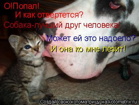 Котоматрица: О!Попал! И как отвертется? Собака-лучший друг человека! Может ей это надоело? И она ко мне лезит!