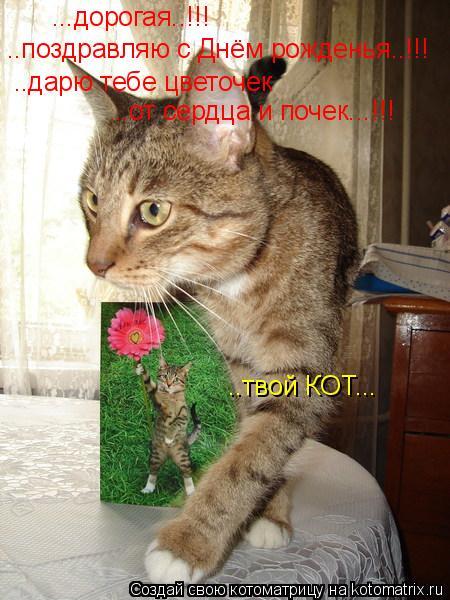 Котоматрица: ...дорогая..!!! ..поздравляю с Днём рожденья..!!! ..дарю тебе цветочек ..от сердца и почек...!!! ..твой КОТ...