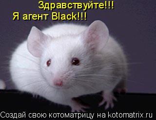 Котоматрица: Здравствуйте!!! Я агент Black!!!