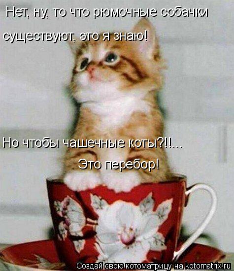 Котоматрица: Нет, ну, то что рюмочные собачки  существуют, это я знаю! Но чтобы чашечные коты?!!... Это перебор!