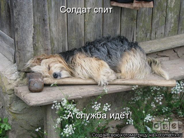 Котоматрица: Солдат спит А служба идёт!