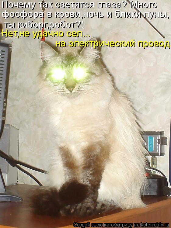 Котоматрица: Нет,не удачно сел...  на электрический провод. Почему так светятся глаза? Много  фосфора в крови,ночь и блики луны, ты киборг,робот?!