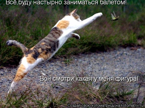 Котоматрица: Всё,буду настырно заниматься балетом! Вон смотри какая у меня фигура!