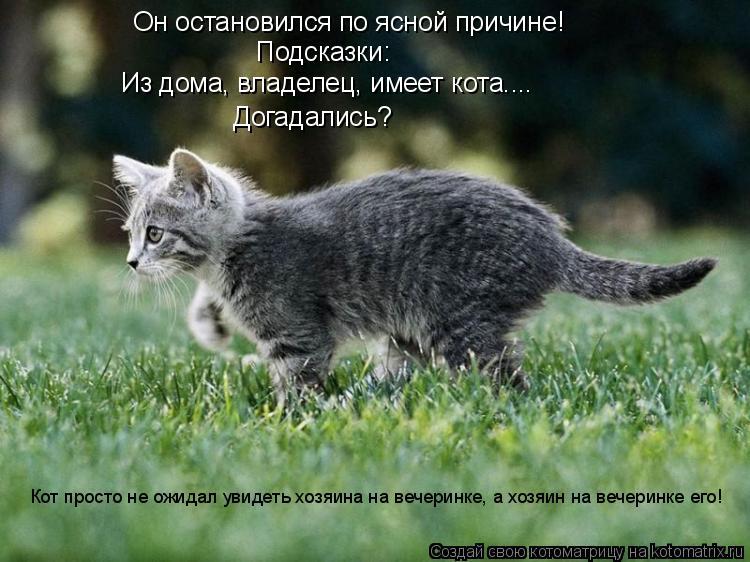 Котоматрица: Он остановился по ясной причине! Подсказки: Из дома, владелец, имеет кота.... Догадались? Кот просто не ожидал увидеть хозяина на вечеринке, а