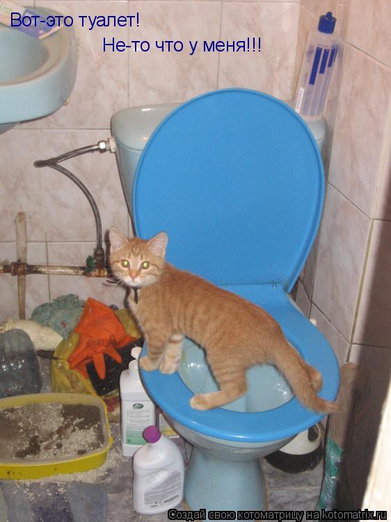 Котоматрица: Вот-это туалет! Не-то что у меня!!!