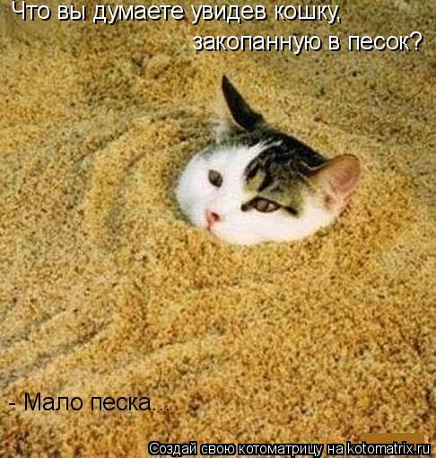 Котоматрица: Что вы думаете увидев кошку,  закопанную в песок? - Мало песка...