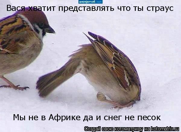Котоматрица: Вася хватит представлять что ты страус Мы не в Африке да и снег не песок