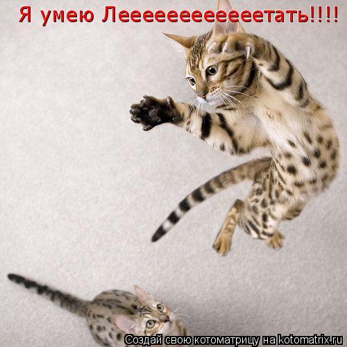 Котоматрица: Я умею Леееееееееееетать!!!! Я умею Леееееееееееетать!!!!