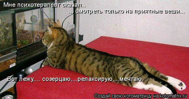 Котоматрица: Мне психотерапевт сказал.. ... смотреть только на приятные веши... Вот лежу,... созерцаю,...релаксирую,...мечтаю.