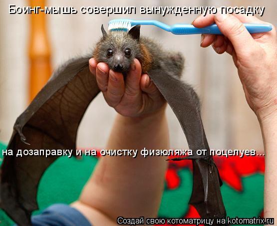 Котоматрица: Боинг-мышь совершил вынужденную посадку  на дозаправку и на очистку физюляжа от поцелуев...