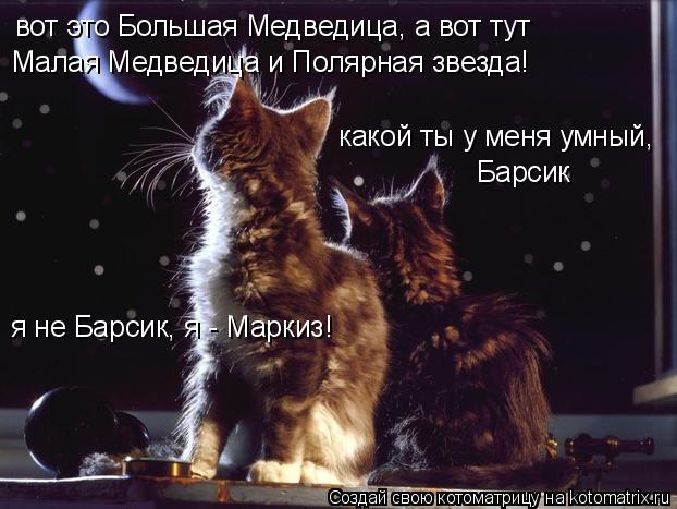 Котоматрица: вот это Большая Медведица, а вот тут  Малая Медведица и Полярная звезда! какой ты у меня умный, Барсик я не Барсик, я - Маркиз!