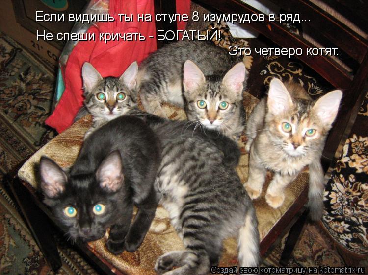 Котоматрица: Если видишь ты на стуле 8 изумрудов в ряд... Не спеши кричать - БОГАТЫЙ! Это четверо котят.