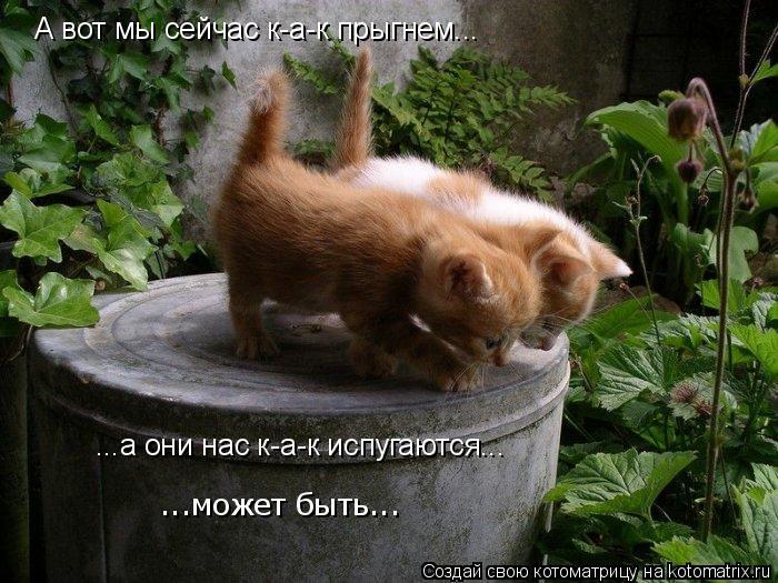Котоматрица: А вот мы сейчас к-а-к прыгнем... ...а они нас к-а-к испугаются... ...может быть...