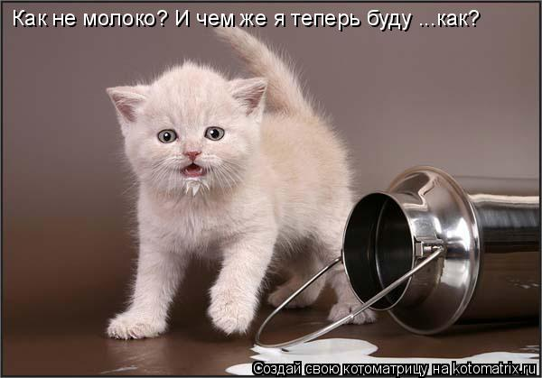 Котоматрица: Как не молоко? И чем же я теперь буду ...как?