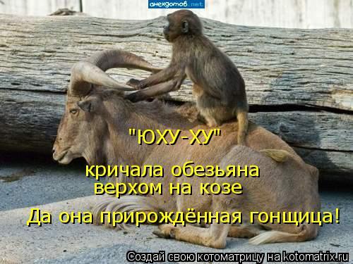 """Котоматрица: """"ЮХУ-ХУ"""" кричала обезьяна верхом на козе Да она прирождённая гонщица!"""