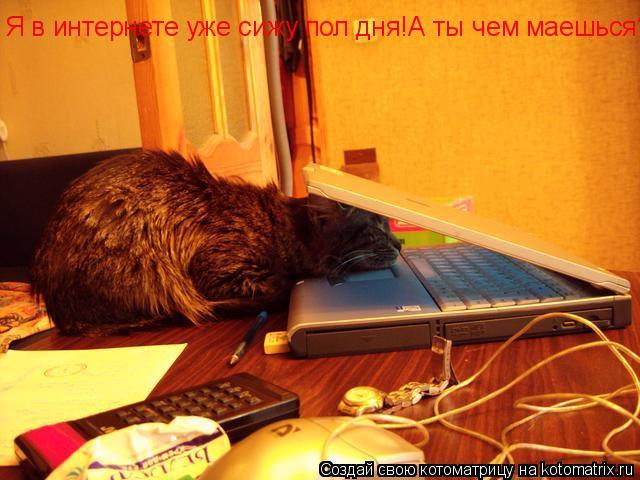 Котоматрица: Я в интернете уже сижу пол дня!А ты чем маешься?