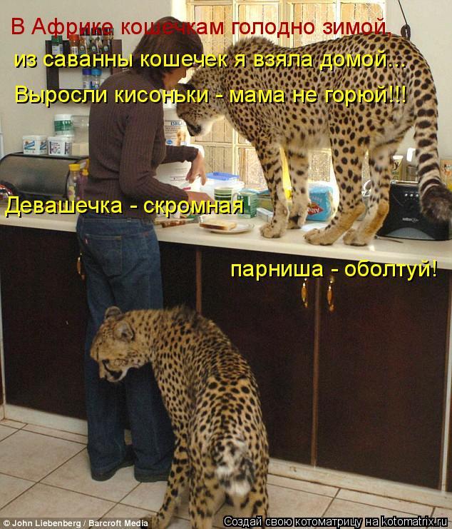 Котоматрица: В Африке кошечкам голодно зимой, из саванны кошечек я взяла домой... Выросли кисоньки - мама не горюй!!! Девашечка - скромная  парниша - оболтуй
