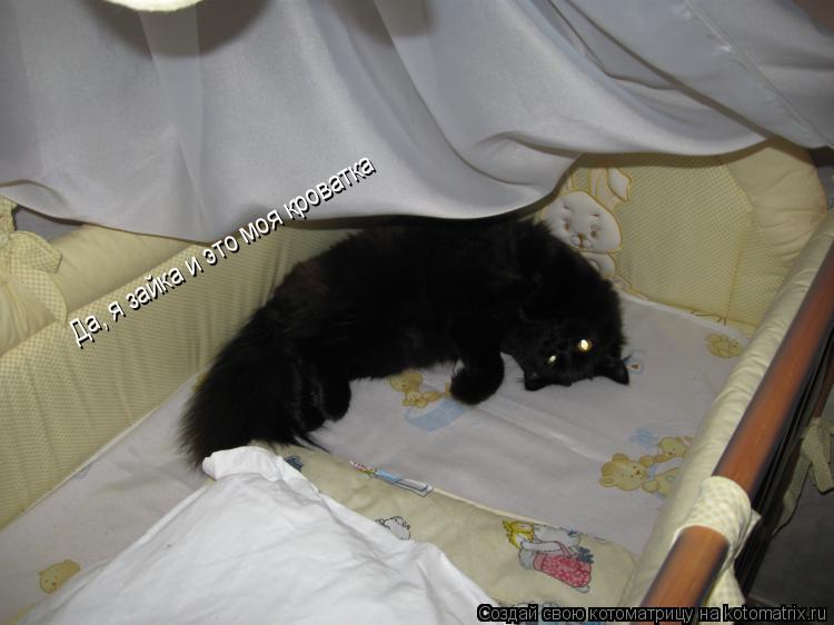 Котоматрица: Да, я зайка и это моя кроватка
