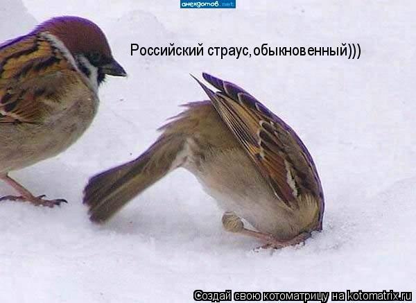 Котоматрица: Российский страус,обыкновенный)))