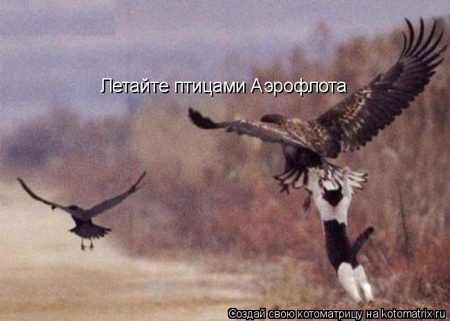 Котоматрица: Летайте птицами Аэрофлота
