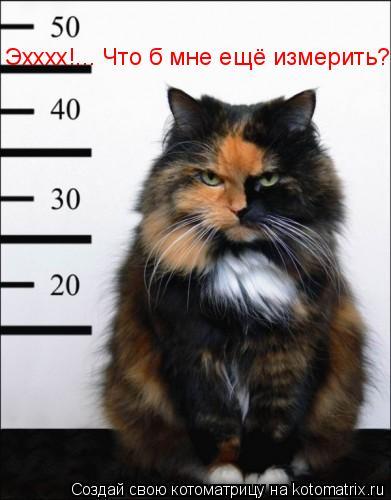 Котоматрица: Эхххх!... Что б мне ещё измерить?