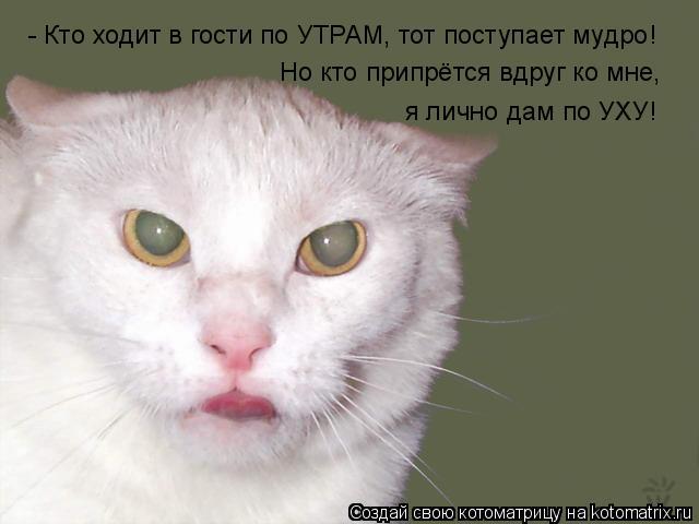 Котоматрица: - Кто ходит в гости по УТРАМ, тот поступает мудро! Но кто припрётся вдруг ко мне, я лично дам по УХУ!