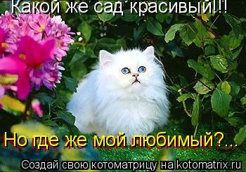 Котоматрица: Какой же сад красивый!!! Но где же мой любимый?... Но где же мой любимый?...