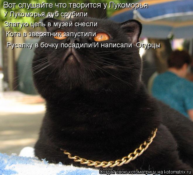 Котоматрица: Вот слушайте что творится у Лукоморья У Лукоморья дуб срубили   Златую цепь в музей снесли    Кота в зверятник запустили   Русалку в бочку пос