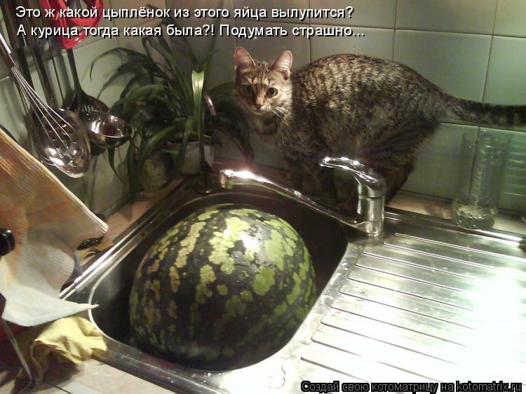 Котоматрица: Это ж какой цыплёнок из этого яйца вылупится? А курица тогда какая была?! Подумать страшно...