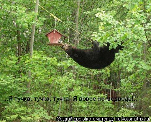Котоматрица: ...Я тучка, тучка, тучка! Я вовсе не медведь!..
