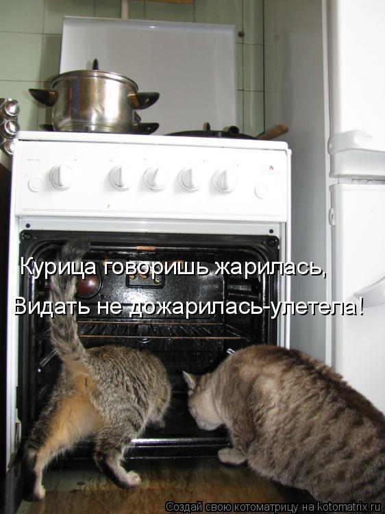 Котоматрица: Курица говоришь жарилась, Видать не дожарилась-улетела!