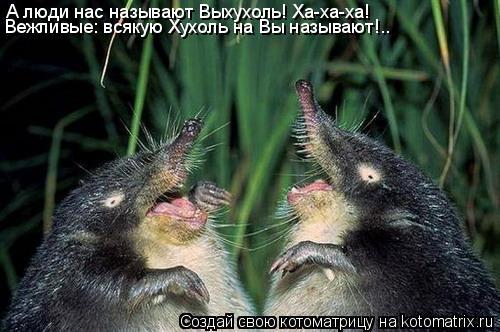 Котоматрица: А люди нас называют Выхухоль! Ха-ха-ха!  Вежливые: всякую Хухоль на Вы называют!..