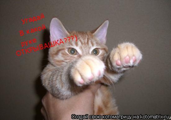 Котоматрица: Угадай В какой руке ОТКРЫВАШКА???)