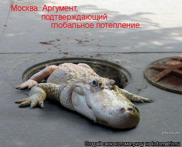 Котоматрица: Москва. Аргумент,  подтверждающий  глобальное потепление.