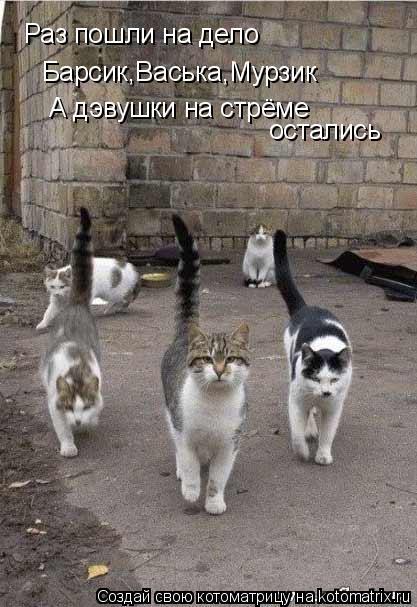 Котоматрица: Раз пошли на дело Барсик,Васька,Мурзик А дэвушки на стрёме остались