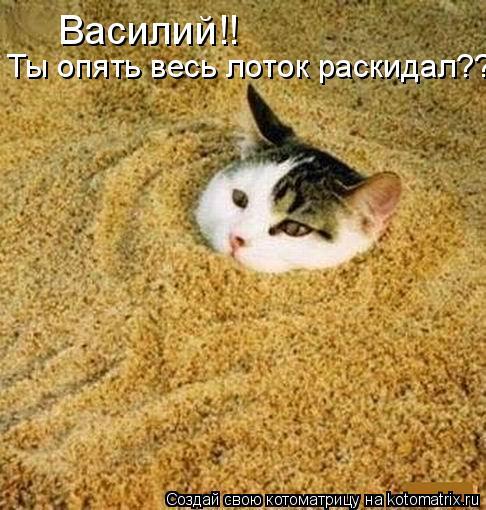 Котоматрица: Василий!!  Ты опять весь лоток раскидал??