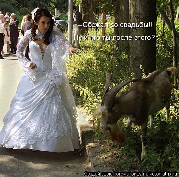 Котоматрица: --Сбежал со свадьбы!!! Ну и кто ты после этого?