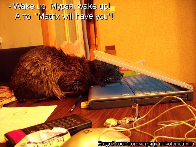 """Котоматрица: - Wake up, Мурзя, wake up!  А то  """"Matrix will have you""""!"""