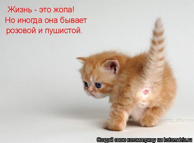 Котоматрица: Жизнь - это жопа!  Но иногда она бывает  розовой и пушистой.
